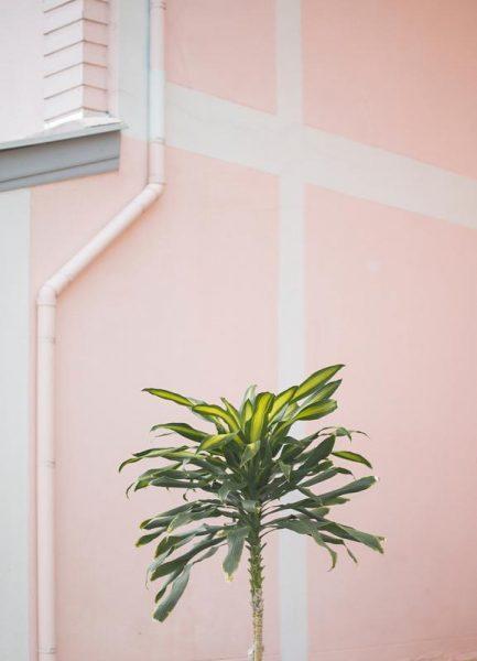 Pastel Palms Leinwandbild