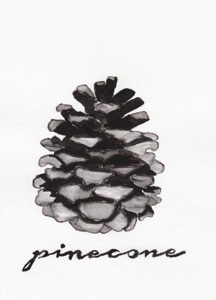 Pine Cone Leinwandbild