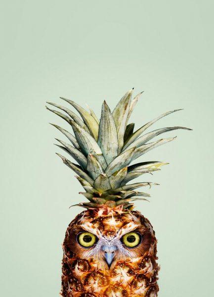 Pineapple Owl Leinwandbild