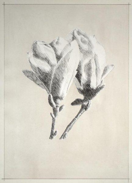 Profond Magnolia Leinwandbild
