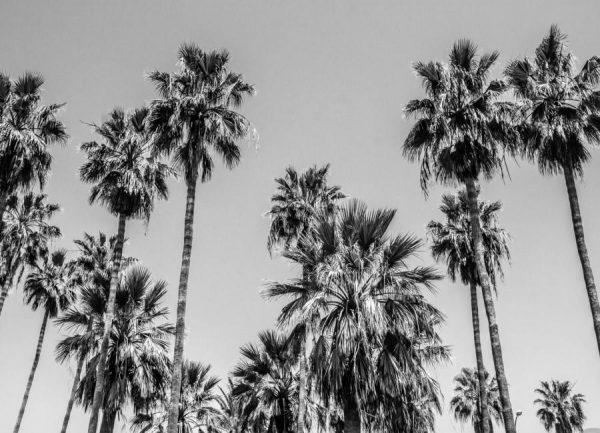 Sabal Palmetto I Leinwandbild