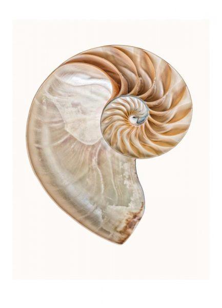 Shell 4 Leinwandbild