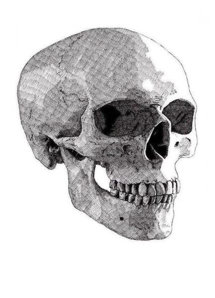 Skull 2 Leinwandbild