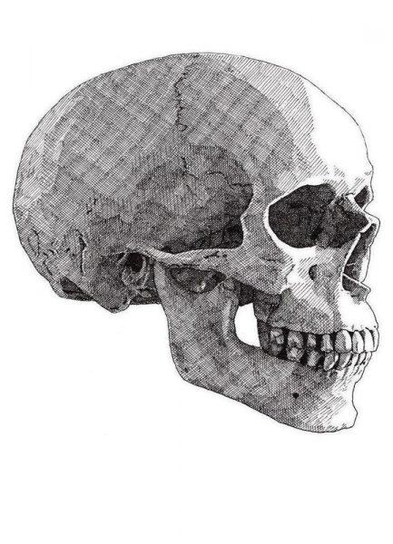 Skull 3 Leinwandbild