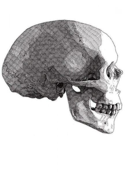 Skull 4 Leinwandbild