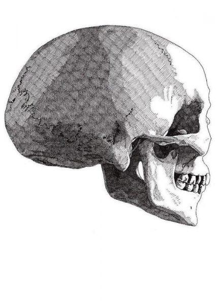 Skull 5 Leinwandbild