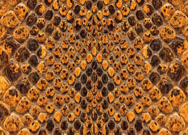 Snake Pattern Leinwandbild