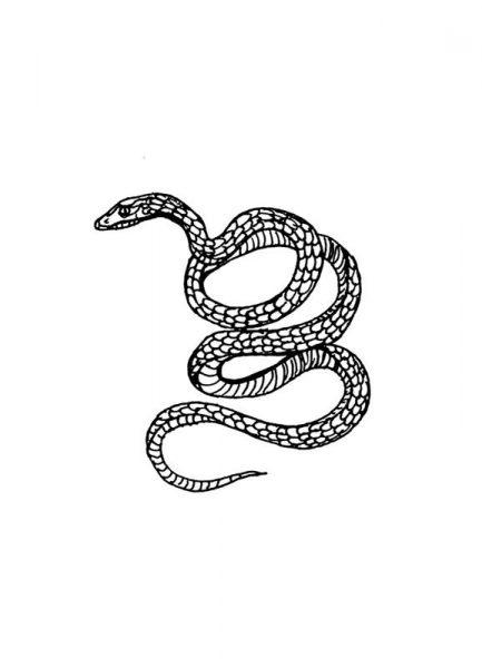 Snake White Leinwandbild