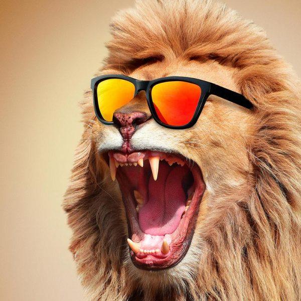 Sunny Lion Leinwandbild