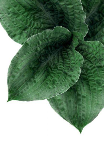 Teichpflanze Leinwandbild