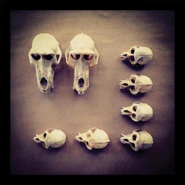 The Golden Skull Leinwandbild