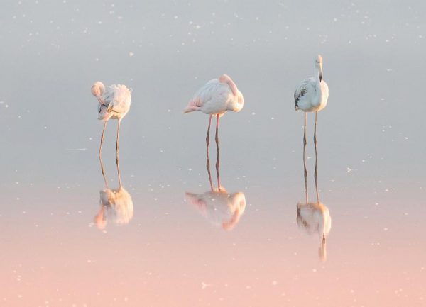Three Flamingos Natalia Rublina Leinwandbild