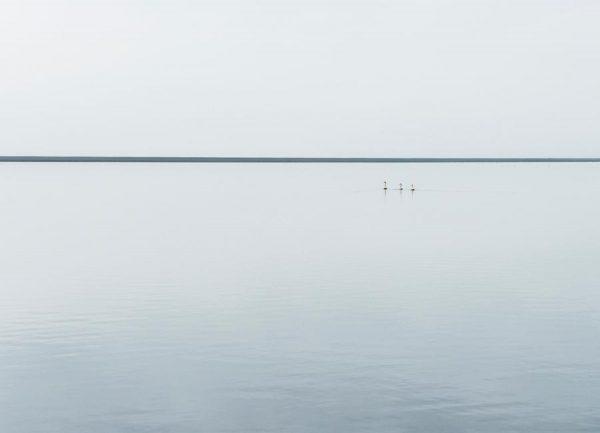 Tree Swans Viggo Johansen Leinwandbild