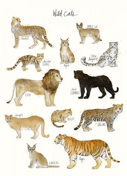 Wild Cats Leinwandbild