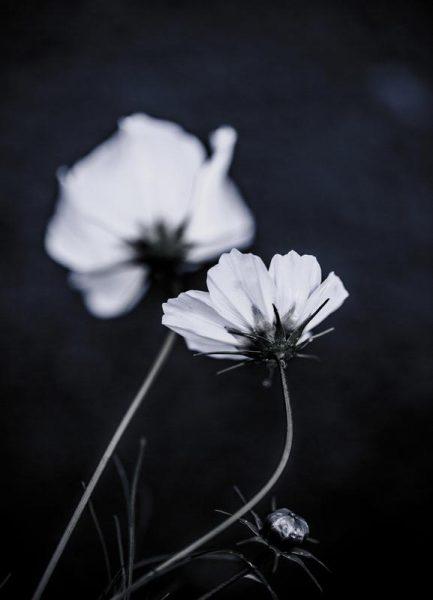 Wild Flowers 2 Leinwandbild