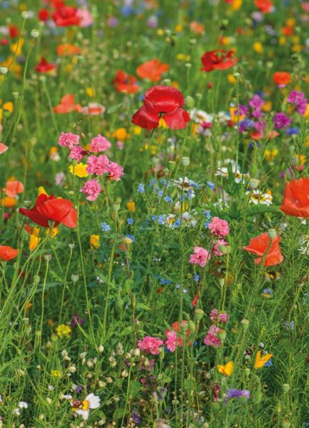 Wild Flowers Field 2 Leinwandbild